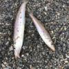 20191006大磯・茅ヶ崎のサーフ釣行 シロギスを釣って食べたい
