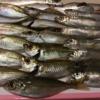 20191101  勝浦・鴨川 アジ釣り 穴釣りの後の、遠投カゴ釣り その2