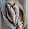 20160320 鴨川方面 カゴ釣り&アジング トリオで突撃